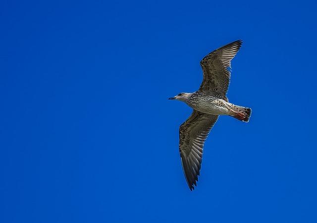 seagull-416129_640